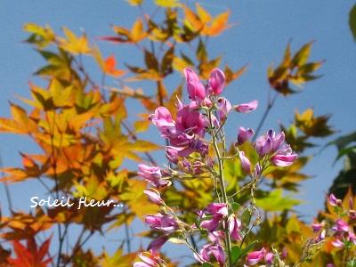 秋の萩の花と、池の庭での観月・・・☆_c0098807_21383523.jpg