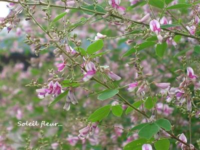 秋の萩の花と、池の庭での観月・・・☆_c0098807_21391928.jpg
