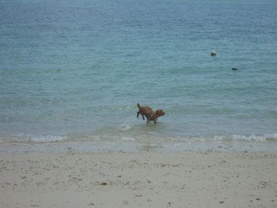 沖縄~久米島 Part 1_f0208315_2254345.jpg