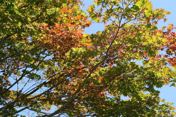 紅葉始まる。_b0174425_1159092.jpg