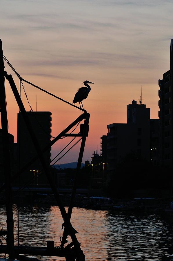 明石漁港(通勤撮影)_d0148541_2041528.jpg
