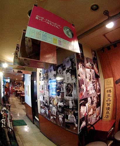 ヨウカンさん中吊り広告と京都から帰って来たパネル展@つくしんぼ_a0028451_12464384.jpg