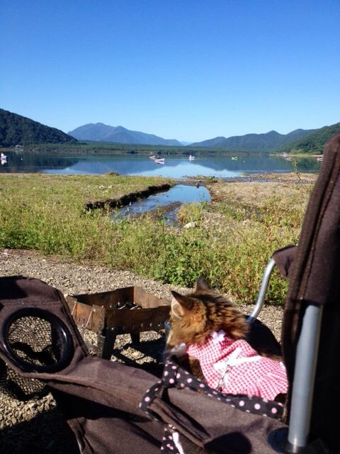 西湖☆キャンプ&猫カヤック♩_c0151965_13181854.jpg