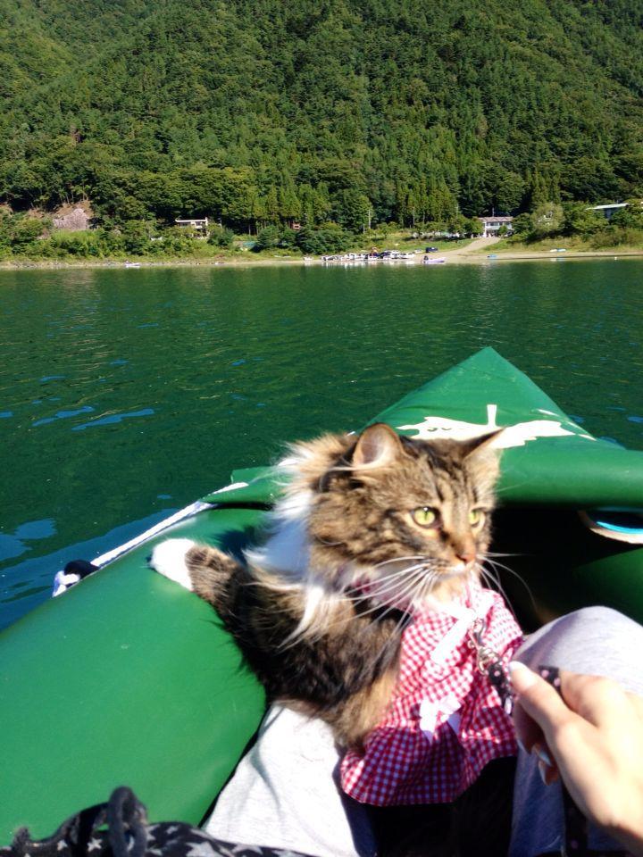 西湖☆キャンプ&猫カヤック♩_c0151965_13182661.jpg