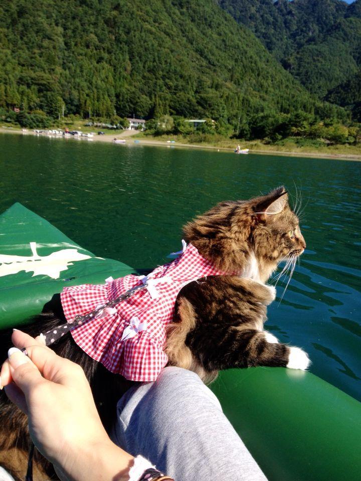 西湖☆キャンプ&猫カヤック♩_c0151965_13183050.jpg