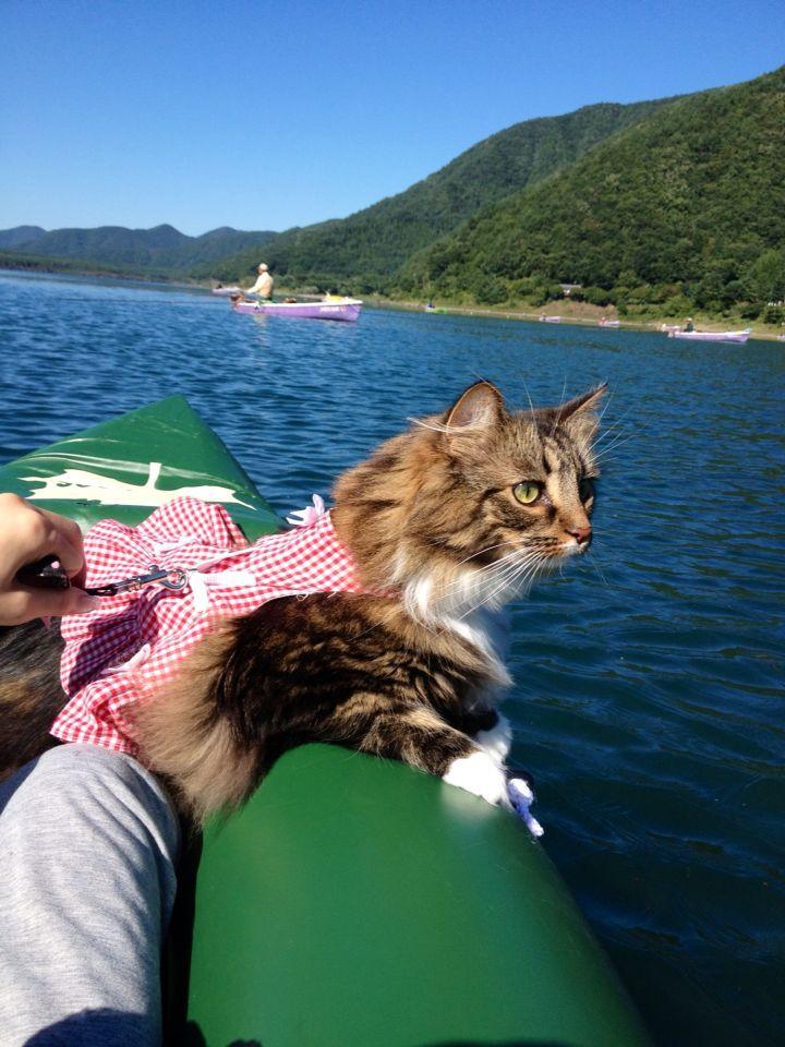 西湖☆キャンプ&猫カヤック♩_c0151965_13183337.jpg