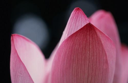 「咲く」・・・Prayers ~祈りの時~_a0131787_16175999.jpg