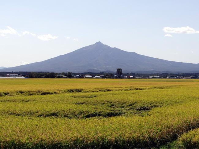台風の後の  田んぼと岩木山_a0136293_15114260.jpg