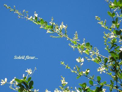白花萩の、青空の向こう側から・・・♪_c0098807_20584462.jpg
