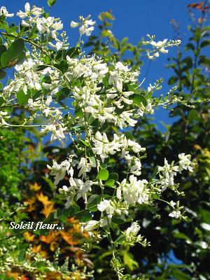 白花萩の、青空の向こう側から・・・♪_c0098807_21114733.jpg