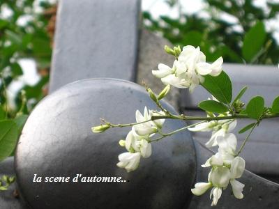 白花萩の、青空の向こう側から・・・♪_c0098807_21223859.jpg