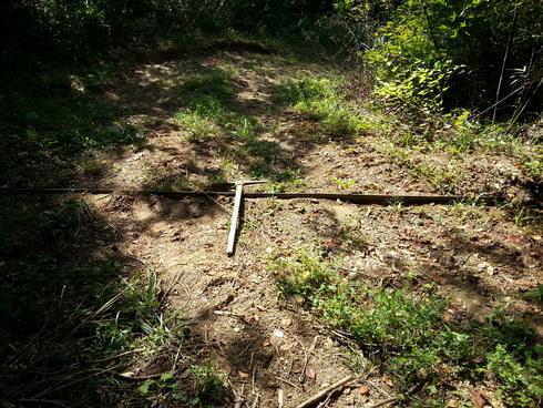 林業時々農業_d0190318_19424181.jpg