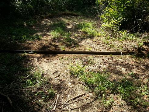 林業時々農業_d0190318_1942549.jpg