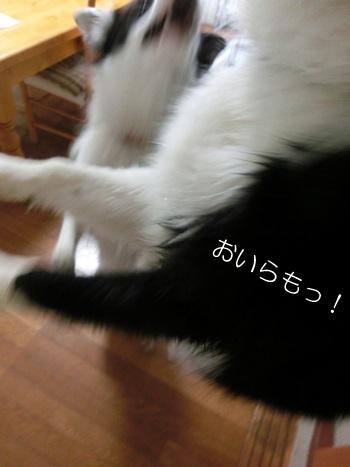 b0279527_20552577.jpg