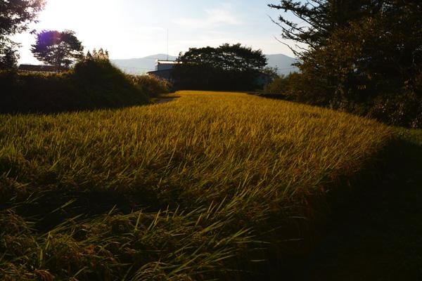 カッパ淵〜岩手県遠野市_b0175635_148091.jpg