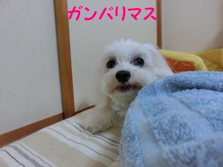 b0193480_22183895.jpg