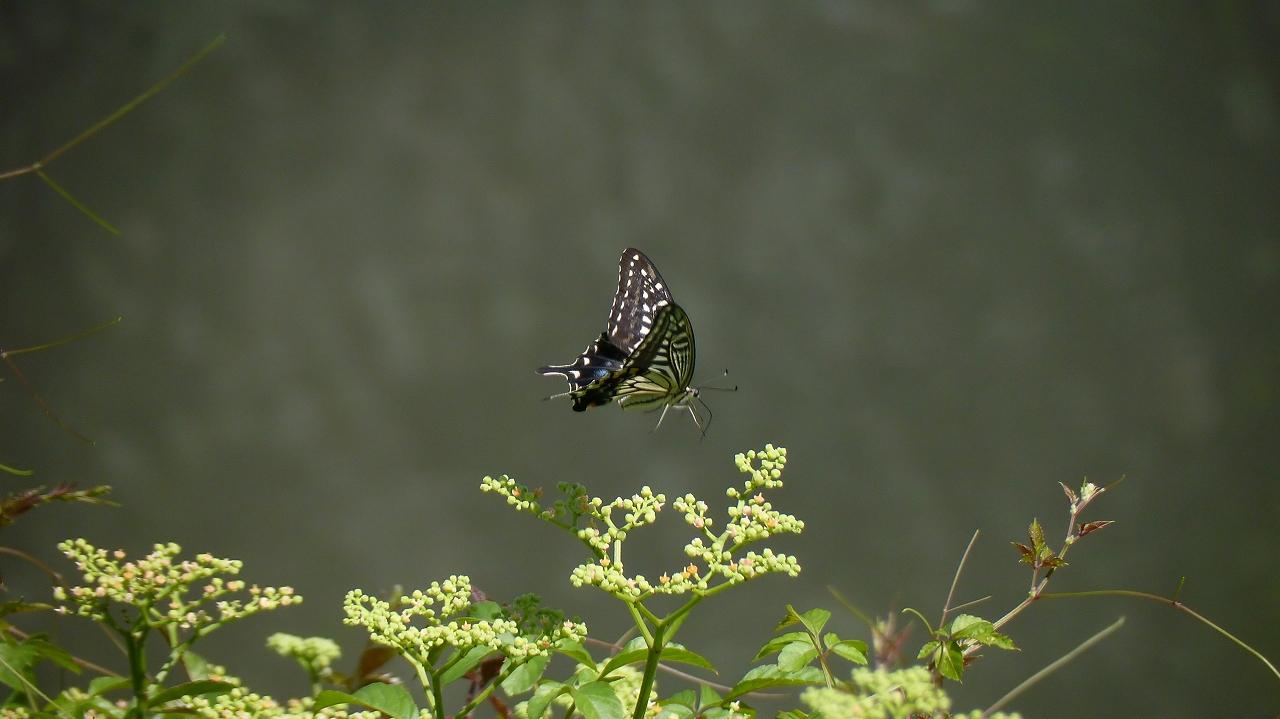 秋の昆虫シリーズ②_a0185081_12422078.jpg