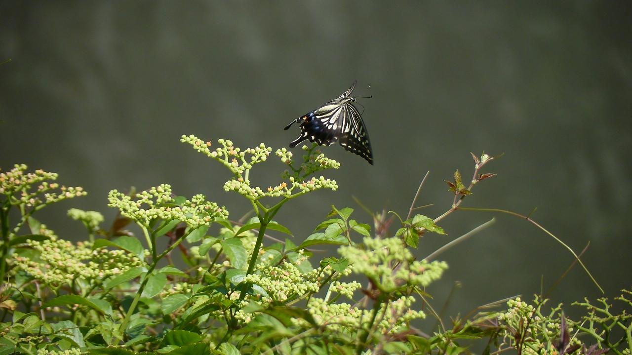 秋の昆虫シリーズ②_a0185081_12423228.jpg