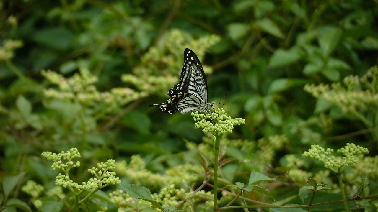 秋の昆虫シリーズ②_a0185081_124283.jpg