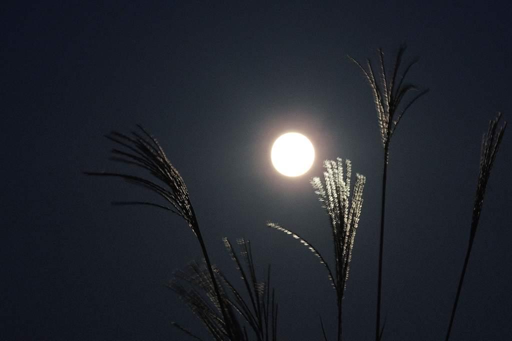 中秋の名月/カワセミ/山の秋_b0024798_18184576.jpg