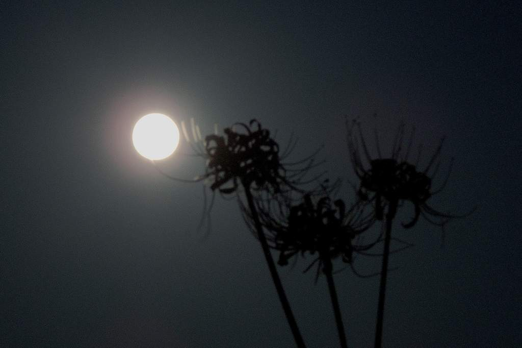 中秋の名月/カワセミ/山の秋_b0024798_1819395.jpg