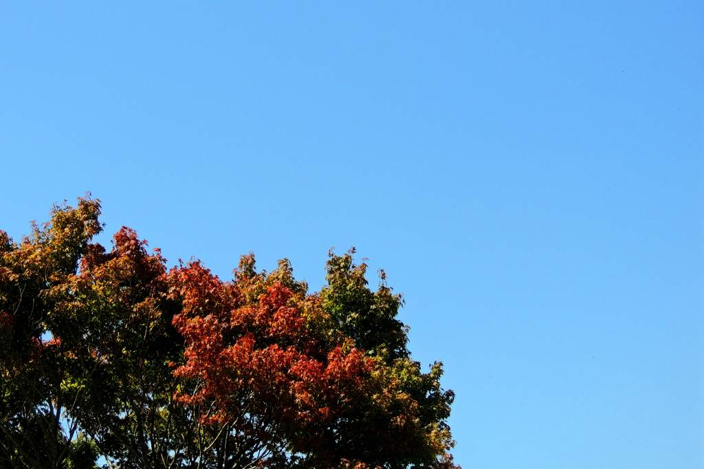 中秋の名月/カワセミ/山の秋_b0024798_18223873.jpg