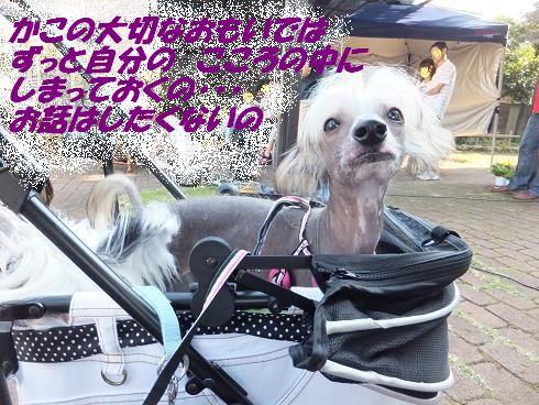 f0179203_6334697.jpg