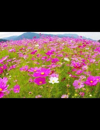 ふくい浪漫 い〜ざぁええDay〜前野 博紀さん〜_a0059209_038184.jpg