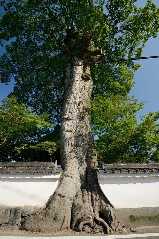 穴太寺周辺の曼珠沙華2013 其の一_f0032011_18324076.jpg