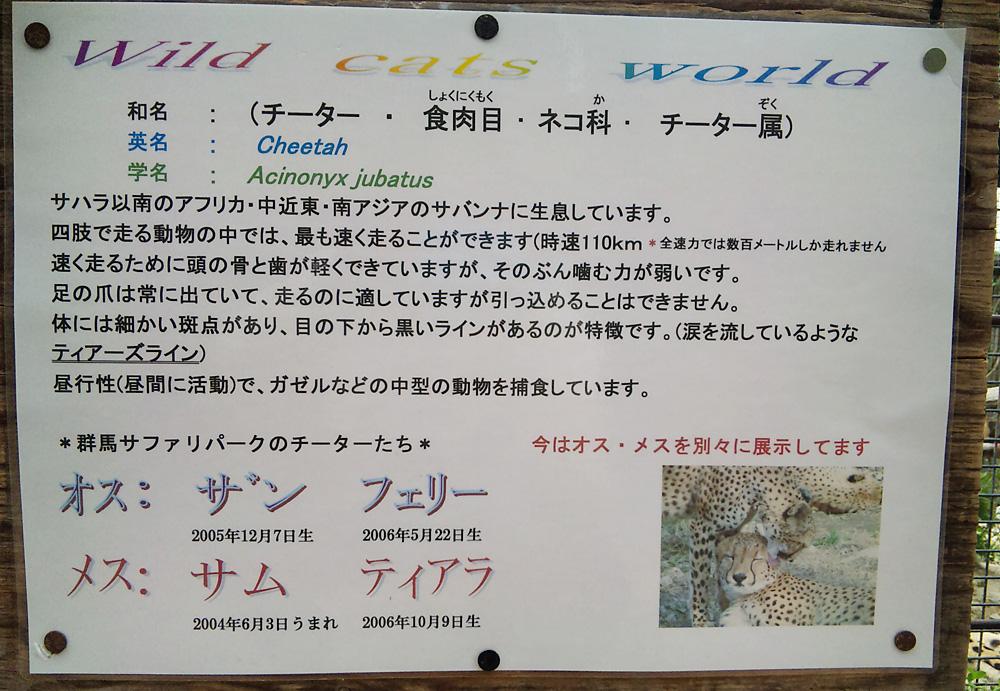 2013.5.28 群馬サファリ☆チーターのザンとフェリー 【Cheetah】_f0250322_21455875.jpg