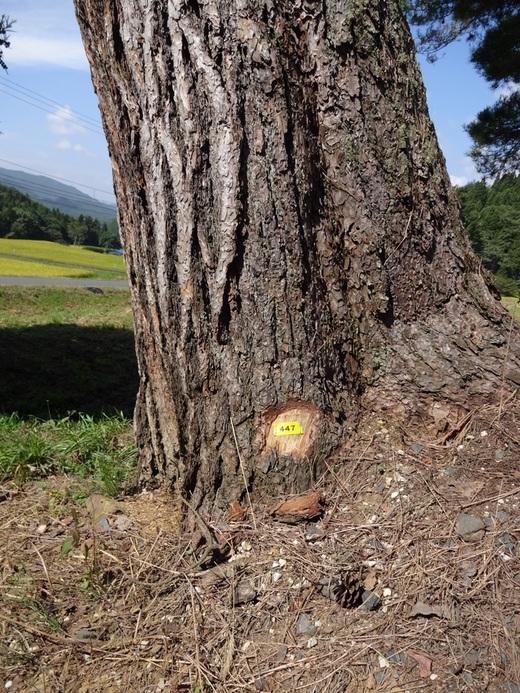 駒形神社例祭_c0111229_2122585.jpg