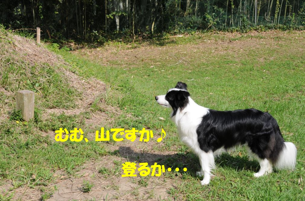 c0147241_18332052.jpg