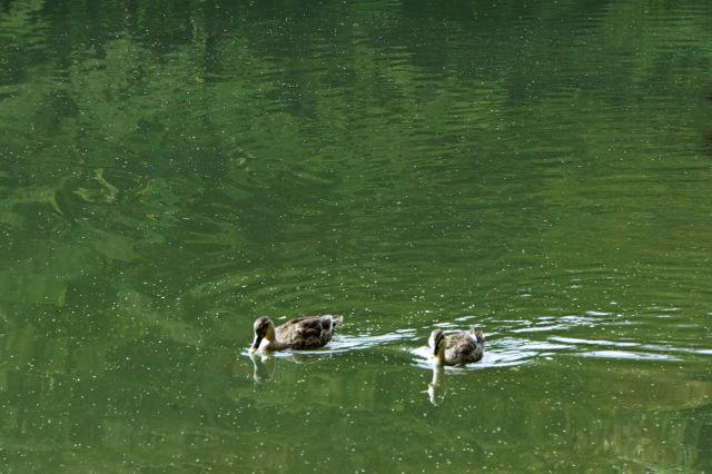 池のほとりにて_a0257652_22391212.jpg