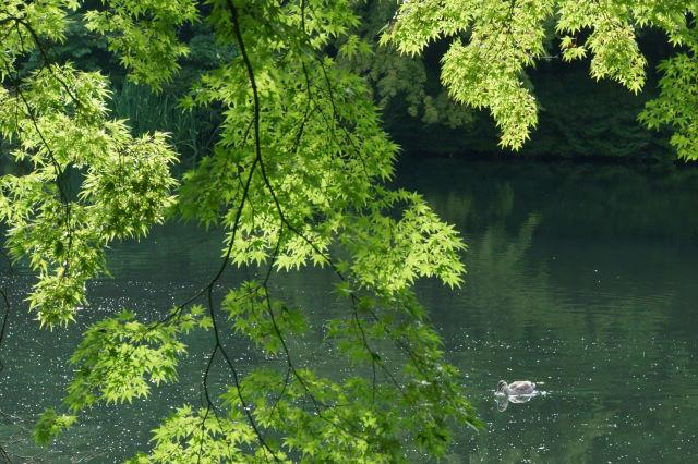 池のほとりにて_a0257652_2331782.jpg