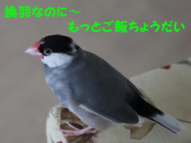 b0158061_2042676.jpg