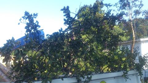 サルスベリの木を植樹。_d0182179_132396.jpg