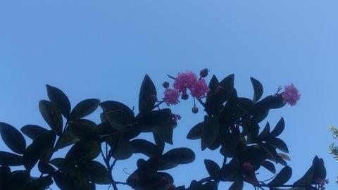 サルスベリの木を植樹。_d0182179_1334896.jpg