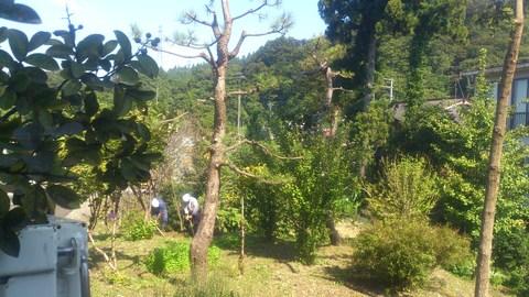 サルスベリの木を植樹。_d0182179_15563217.jpg