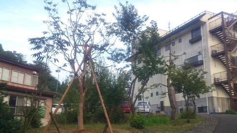 サルスベリの木を植樹。_d0182179_16403111.jpg