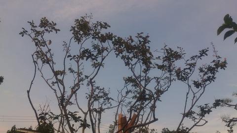サルスベリの木を植樹。_d0182179_16421760.jpg