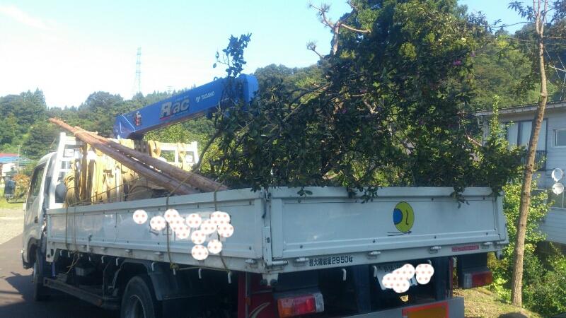 サルスベリの木を植樹。_d0182179_18553968.jpg