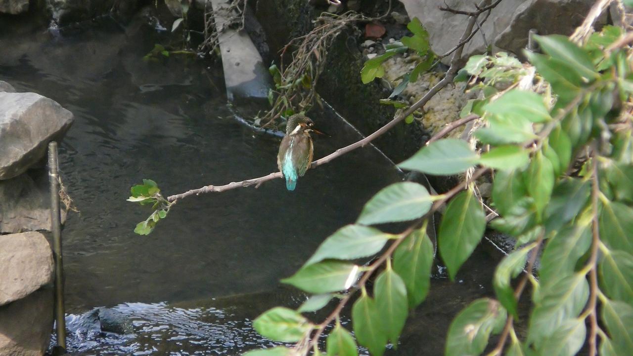 【 日記 9/22(日) 】 今日の笹目川 (ヘルパー編)_a0185081_15155464.jpg