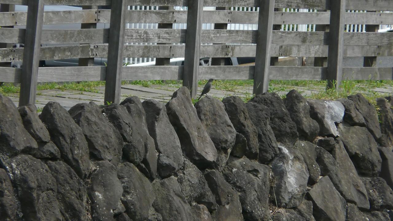 【 日記 9/22(日) 】 今日の笹目川 (ヘルパー編)_a0185081_1518456.jpg
