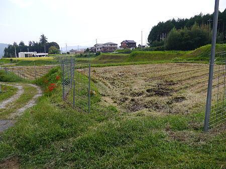 稲刈り_a0026295_1629826.jpg