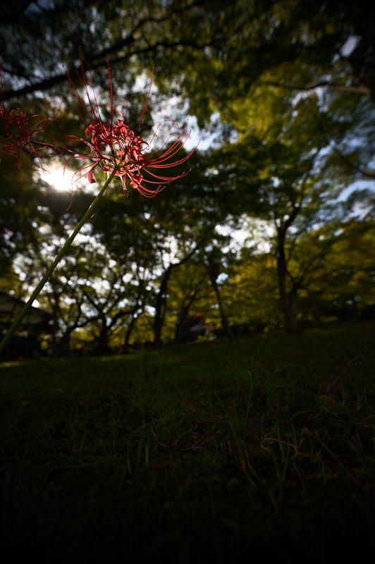 晩夏の真如堂 其の一_f0032011_185136.jpg