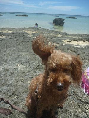 沖縄~久米島 Part2_f0208315_015132.jpg