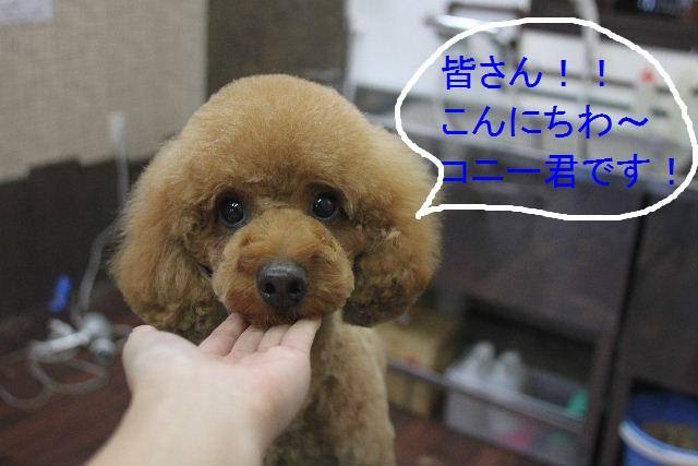 こんばんわ!!_b0130018_23251240.jpg