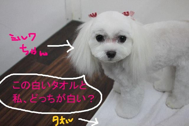 こんばんわ!!_b0130018_23265845.jpg