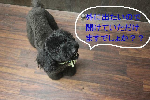 こんばんわ!!_b0130018_23281753.jpg