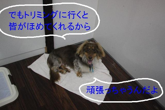 こんばんわ!!_b0130018_2332774.jpg
